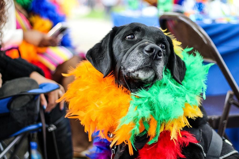 Animal carnival celebration 2306831