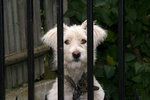 Large dogs can be easily kept behind a standard wrought iron fence. For small dogs a puppy panel may be in order.