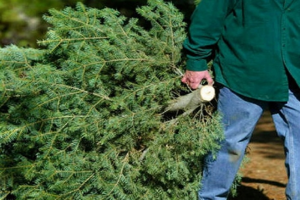 Saint Charles Christmas 2021 City Of St Charles Christmas Tree Picked Up On Weeks Of January 4 And January 11 2021 Kane County Reporter