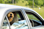 The National Highway Traffic Safety Administration said that it could not conclude that replicating European Union rules on car windows would increase safety.