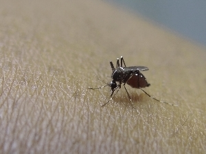 Hawaii is seeking to put a halt to the spread of mosquito-borne illness in the state.