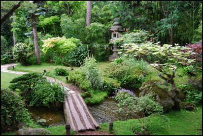Water features and plants that offer privacy are two elements that can be included in a serenity garden.