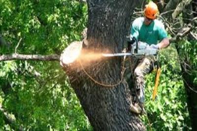 Medium treetrim