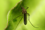 Planting the right garden can help alleviate harassment from mosquitos next summer.