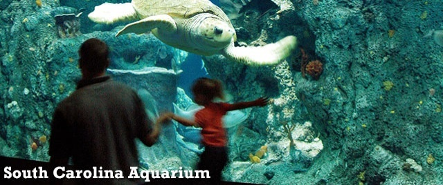 Tax-exempt revenue bonds will be used to fund upgrades at the South Carolina Aquarium in Charleston.
