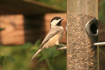With a wide variety of products and seed available, you can tailor your feeder to attract the birds you want to see.