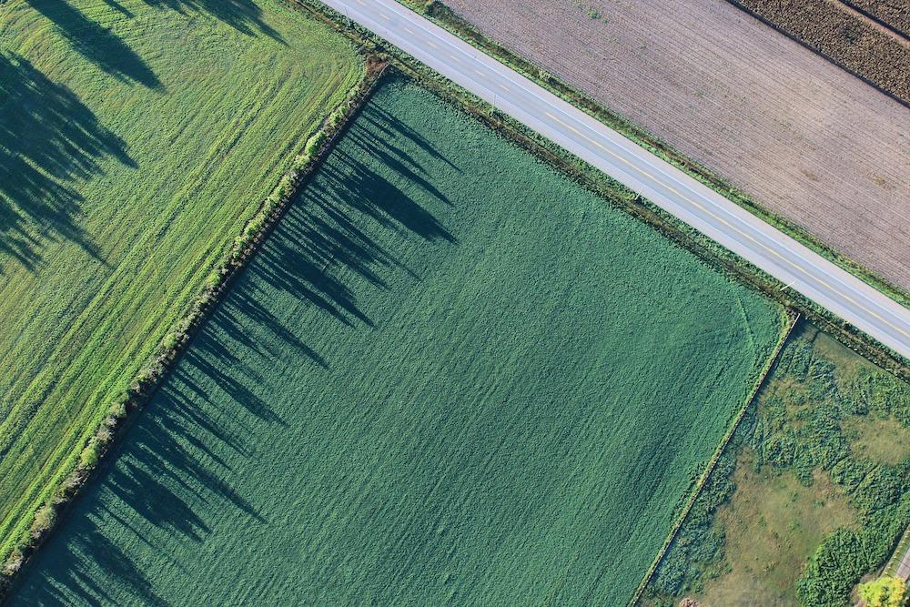 Farm(1000)