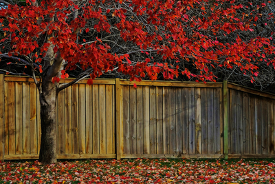 From looks to maintenance, there are key differences between wood and metal fencing.