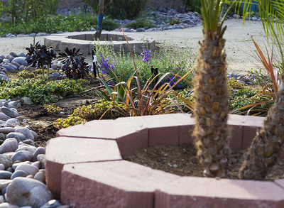 Xeriscaping takes advantage of natural plants to create interesting aesthetics.