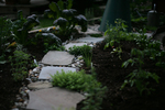 Even the simplest of pathways can make a garden more interesting and inviting.