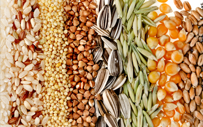 The Global Seed Vault has collected seeds for over 4,000 plant species, including beans, wheat and rice.