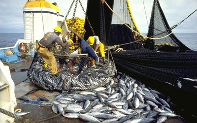 The contract specifies specific breeds as well as species classified by location, being demersal fish and pelagic fish.