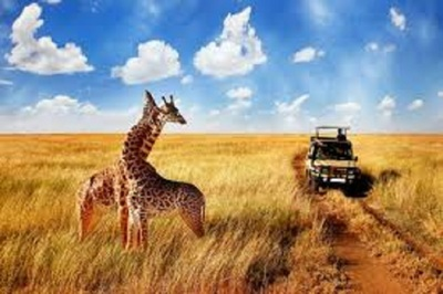 Medium safari