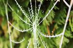 Frost forms when night temperatures drop to or below 32 degrees Fahrenheit.
