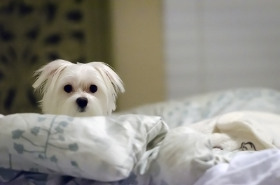 Easy-maintenance bedding is a must in Austin's pet-friendly market.