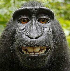 Malaysian macaque monkeys present malaria risk to humans.
