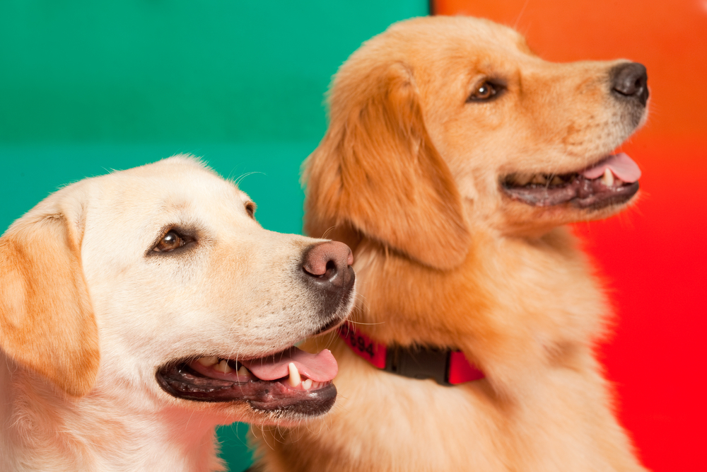 Afree Meetand Greet Consultation is included for every pet.