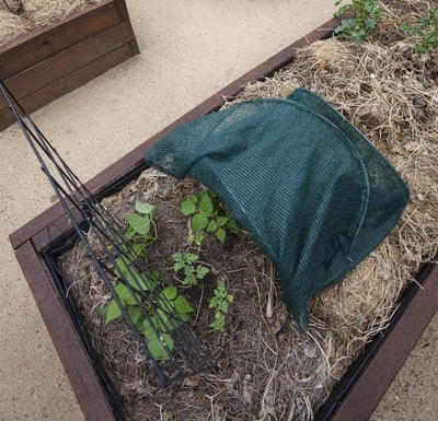 Using supports with the shade cloth helps to create a well-shaded and ventilated garden.