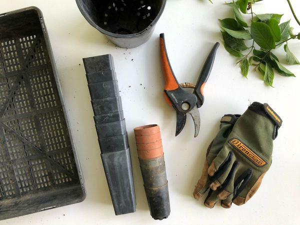 Gardening the right way extends from good garden tools to proper pest care.