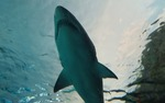The trip took the students to sites up to 35 miles offshore, into areas where mako sharks are known to travel.
