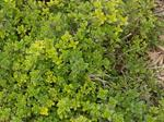 You can plant thyme this month to get a head start on the new year's growth