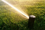 Reduce watering during wet fall and winter weather.