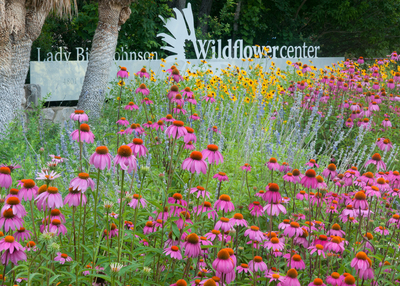 The entrance of the Lady Bird Johnson Wildflower Center welcomes visitors to explore the native plants of Texas.