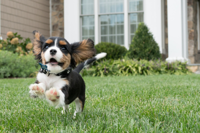 Pets are family, so yard design should take them into account.