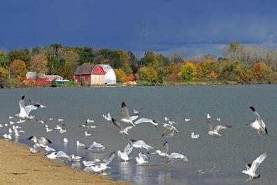Medium mott lake