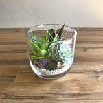 Classic Succulent Terrarium