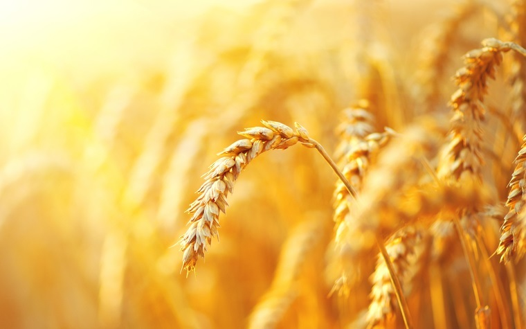 Egypt makes changes in grain handling to fight corruption