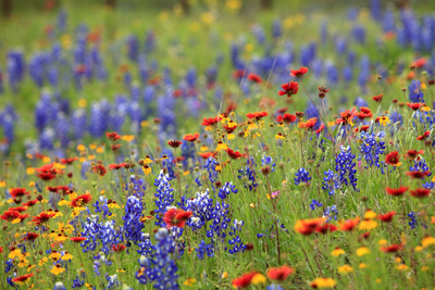 Wildflowers and native plants help conserve water, reduce mowing costs, provide habitat for birds, butterflies and other wildlife and protect the soil from erosion.
