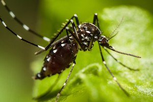 Report details zika virus potential in Texas, Gulf Coast.
