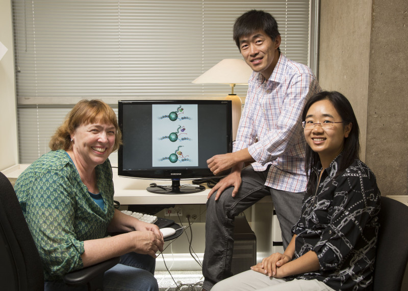 Professor Katherine Jones, from left, with researchers Yupeng Chen and Lirong Zhang.