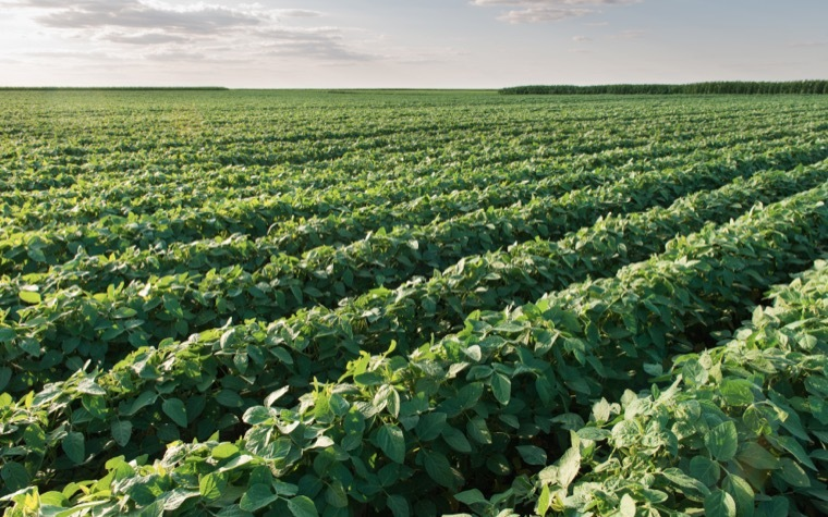 FDA on track to approve Arcadia Biosciences' new soybean technology.