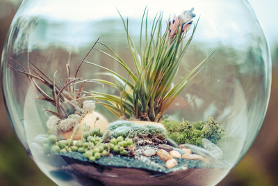 Terrariums offer a touch of