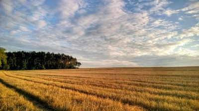 "The Southeastern United States is ideal for growing carinata on ""fallow"" ground during the winter."