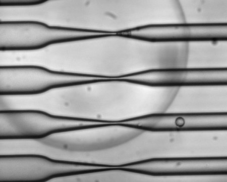 Microfluidic cell-squeezing tool shows promise for cell-based vaccines