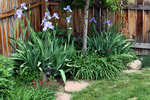 Vegetation and meandering paths can help to improve the visual impact of small yards.