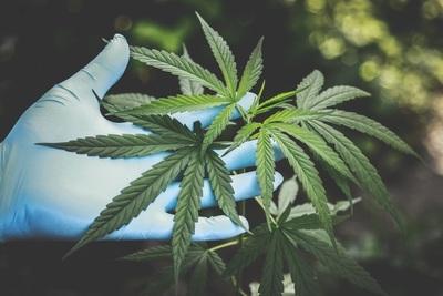 Medium marijuana
