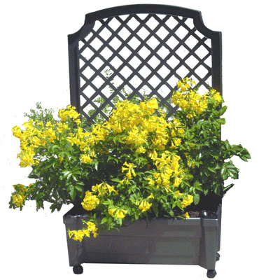 A calypso planter is a flower box with a trellis.