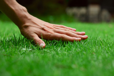 Maintaining a lush green yard requires consistency and effort.