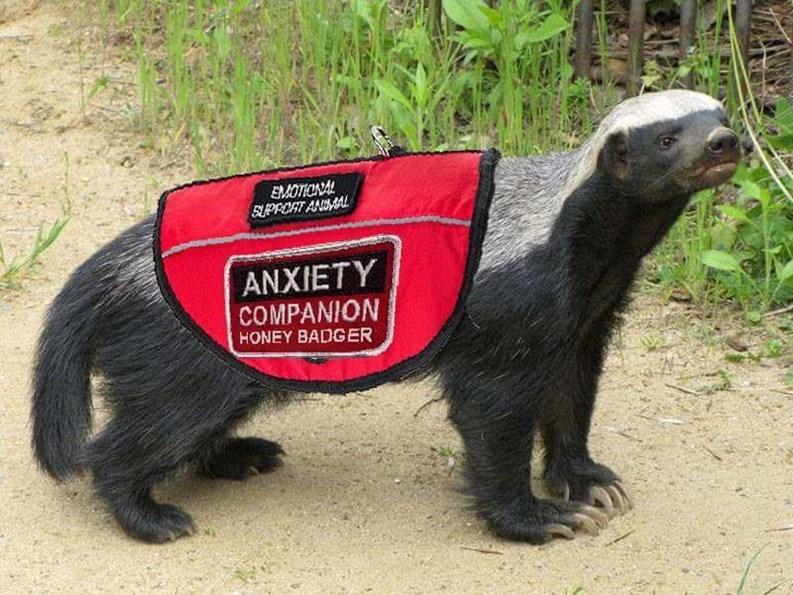 Anxietycompanion