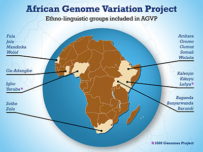 The African Genome Variation Project has involved an international collaboration to map the genomic variation landscape of African populations, including a wide array of ethno-linguistic groups.