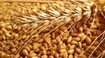 Russia Stuck With Record Wheat Stockpiles as Ruble Slows Exports