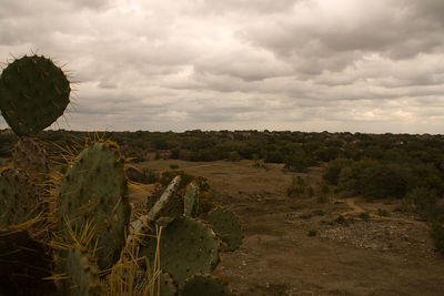 Lady Bird Johnson Wildflower Center is one of Circle C Ranch residents' best bets.