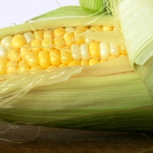 Latin American nations set import records for U.S. corn