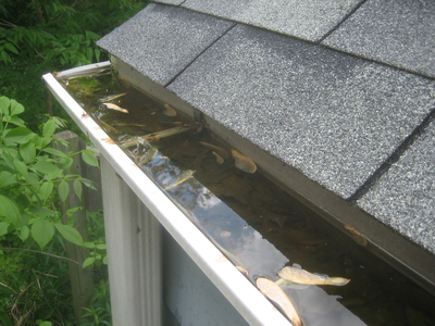 Clogged rain gutters can be a real hassle.