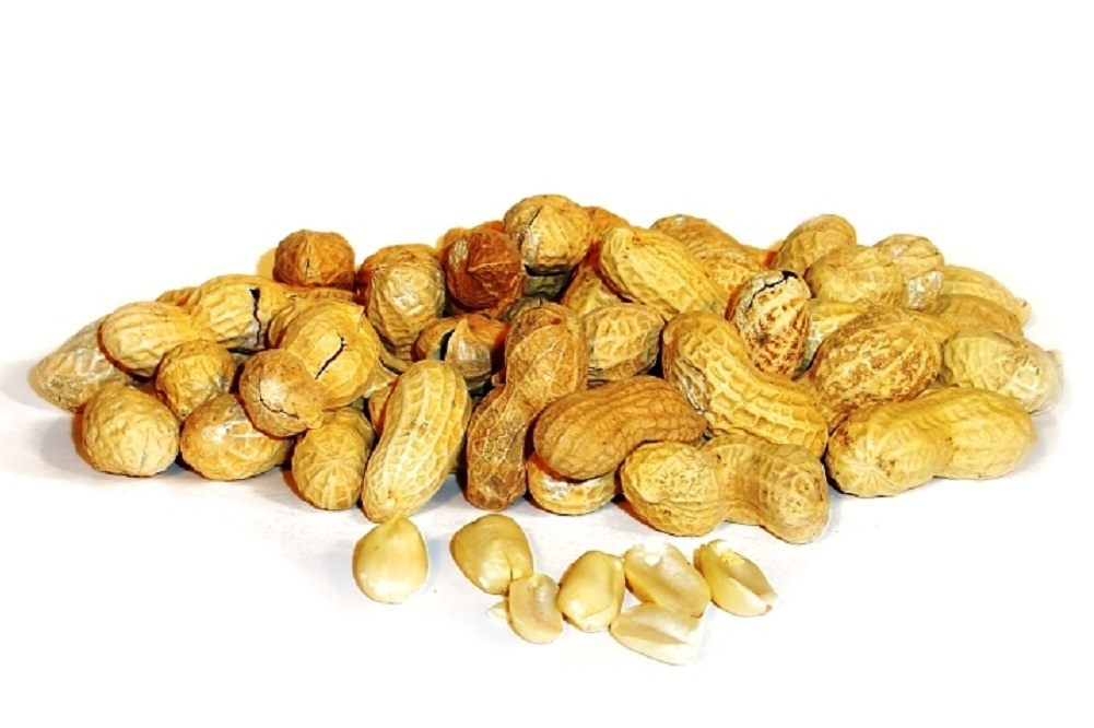 The draft financial law for 2018 will allocate 19 million dirhams to help the peanut and food industries.