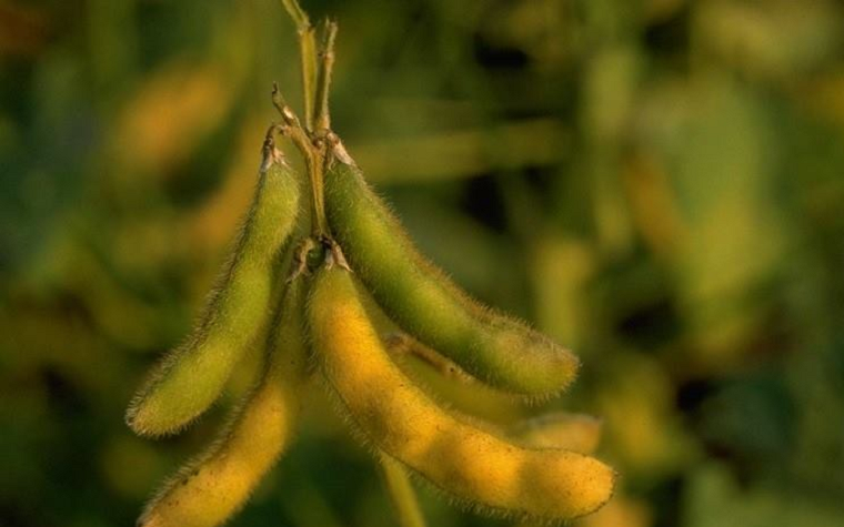 Final approval was needed by the E.U. Commission for the three soybean events.